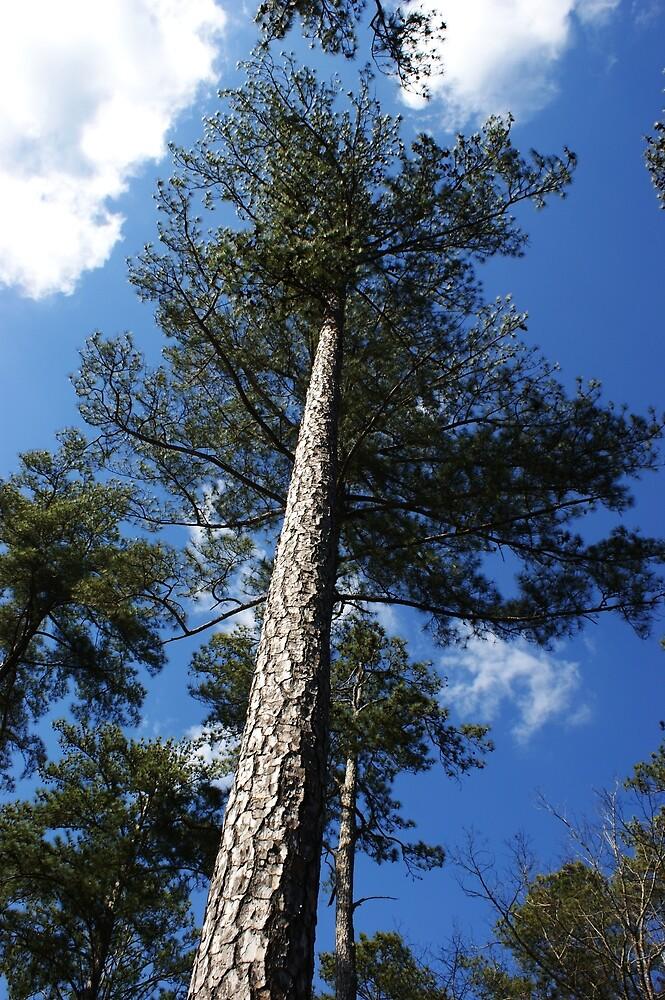 Georgia Pine Tree By Linda Yates Redbubble