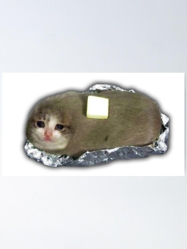Potato Cat Meme : potato, Potato, Butter