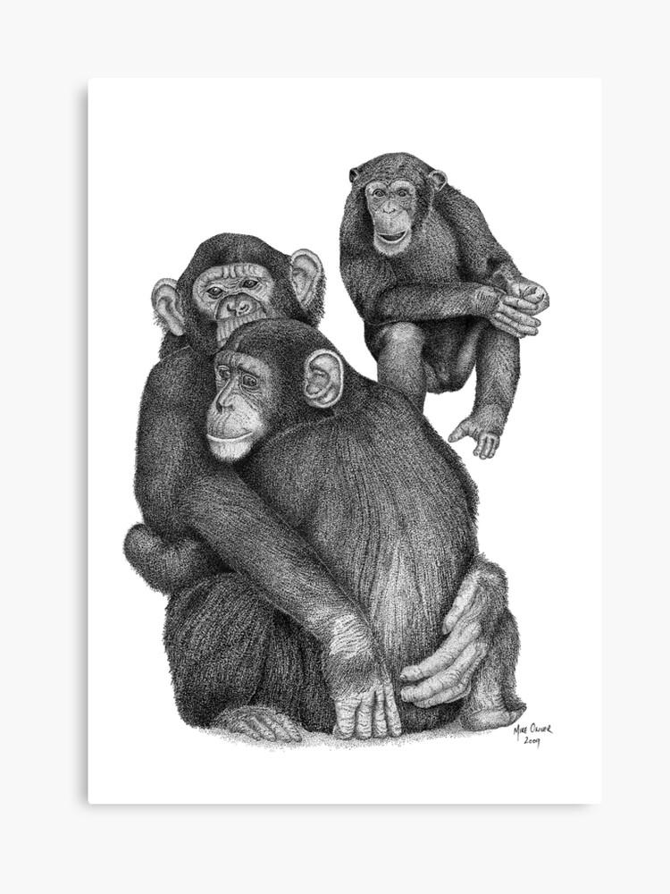 chimpanzee drawing canvas print