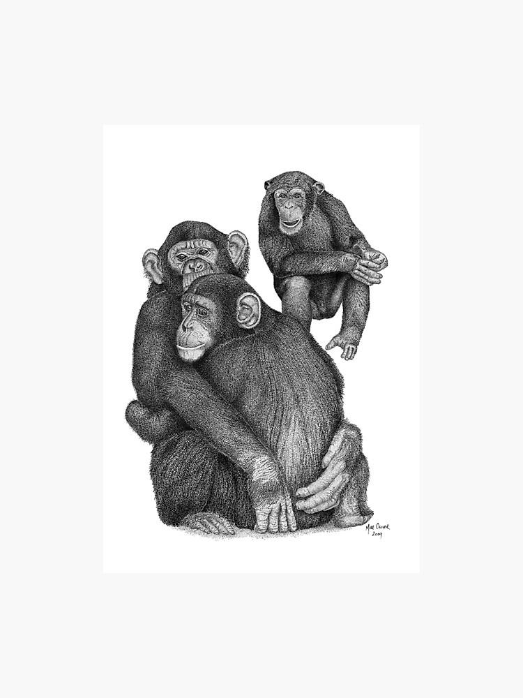 chimpanzee drawing photographic print