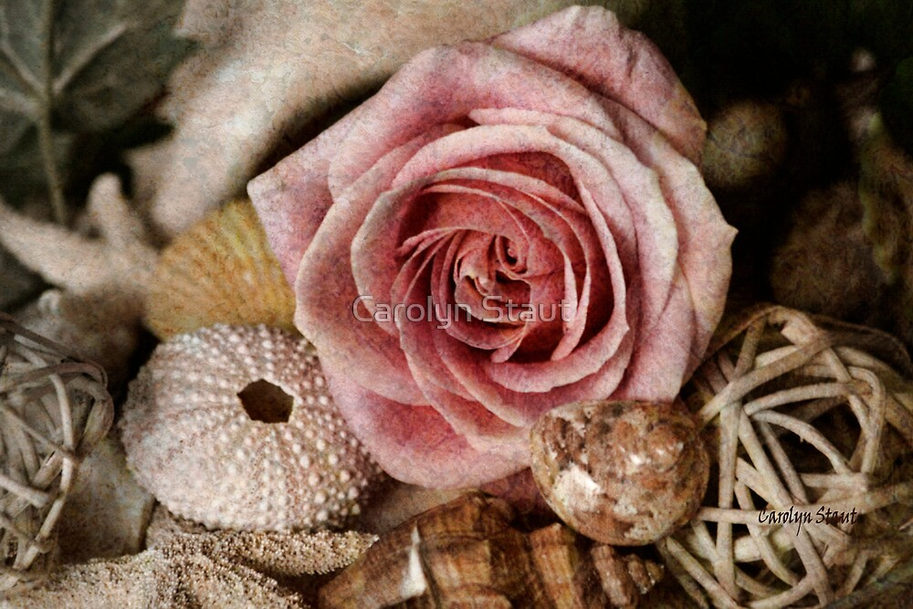 Rustic Rose by Carolyn Staut  Redbubble