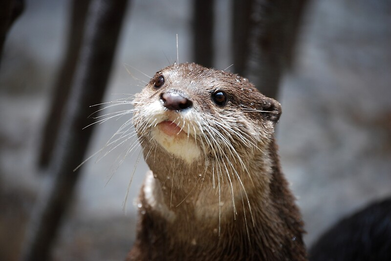 The Cutest Otter Ever By Alliteration Redbubble