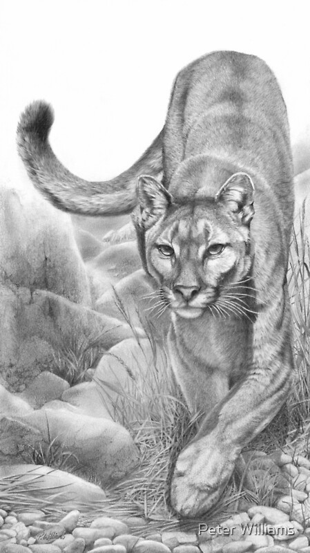 Stealth Cougar Mountain Lion Panther Drawing By Peter Williams Redbubble