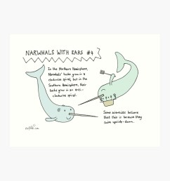 narwhals with ears 4 spirals art print by evilflea redbubble [ 1000 x 1000 Pixel ]