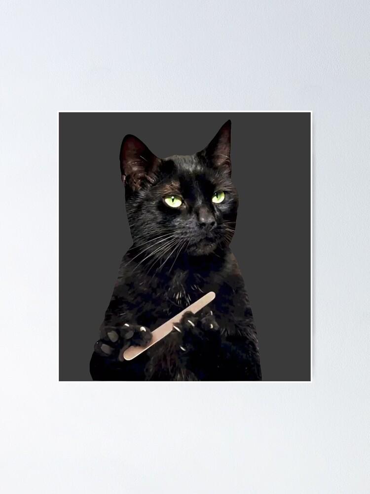 #cat-filing-nails on Tumblr