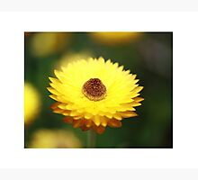Focal Point Photographic Print by Stephen Mitchell