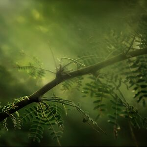 Meditation of Green by © linaji