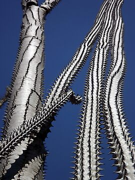 spiny plants