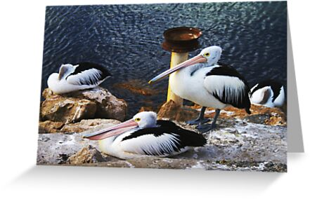 Pelican Sleep Anywhere, by Stephen Mitchell, on Redbubble