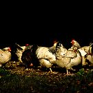 Group of Hens