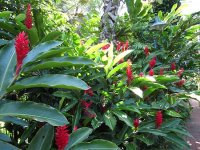 Tropical Garden Ideas Queensland