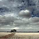A Tree in a Field by Ben Loveday