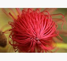 Ready to Bloom Photographic Print by Stephen Mitchell