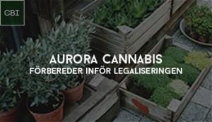 Aurora Cannabis förbereder inför legaliseringen