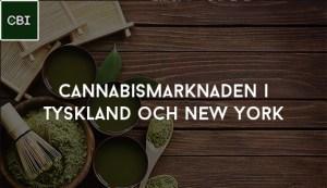 Cannabismarknaden i Tyskland och New York