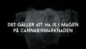 Det gäller att ha is i magen på cannabismarknaden