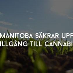 Manitoba säkrar upp tillgång till cannabis