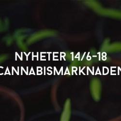 Nyheter Cannabismarknaden 146-18