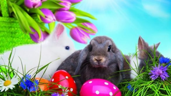 Free-Easter-Bunny-Images