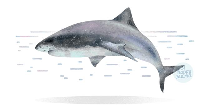 Загадки про акул
