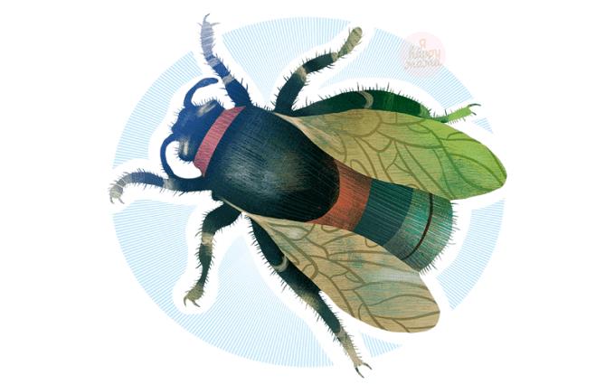 Загадки про мух для детей