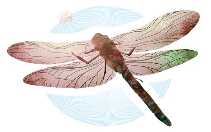 Загадки про стрекозу для детей с ответами