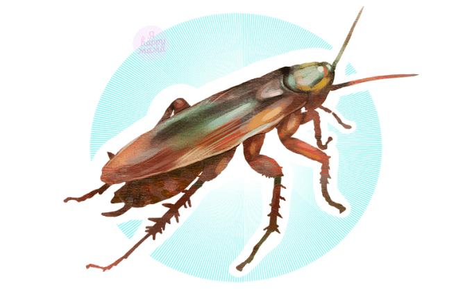 Загадки про таракана для детей с ответами