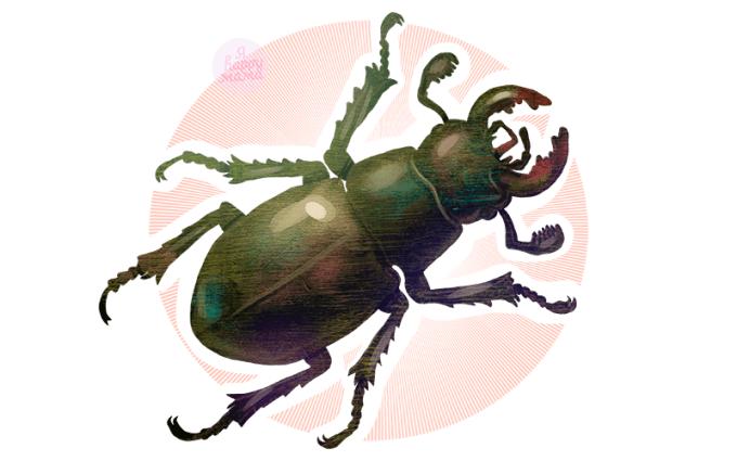 Загадки про жука для детей
