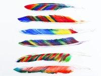 Необычные яркие перья для детей своими руками