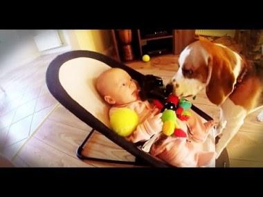 Пёс извиняется перед малышом за то, что стащил игрушку