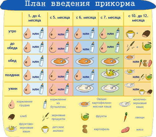 план введения прикорма ребенку