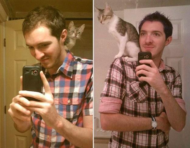 животные выросли