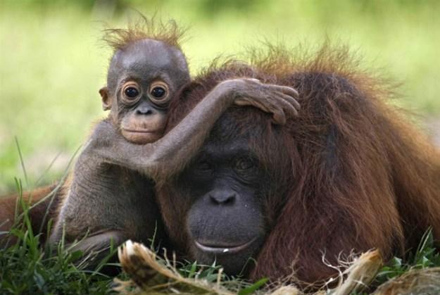 животные мамы 12