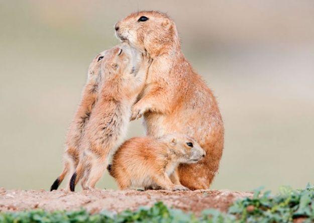 животные мамы 2