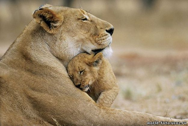 животные мамы 4