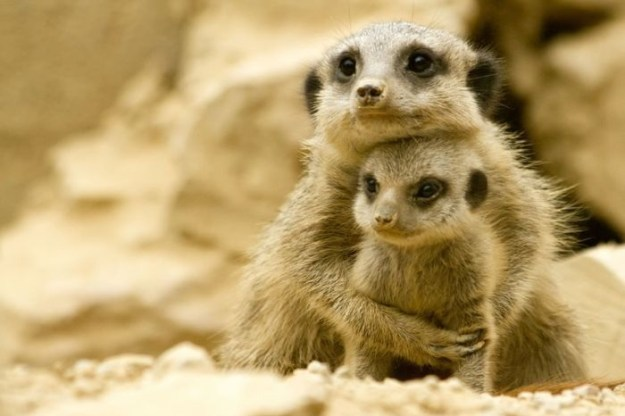 животные мамы1