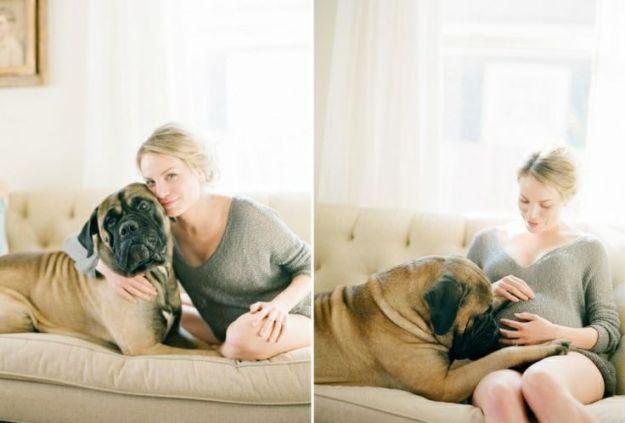 собака и беременная хозяйка