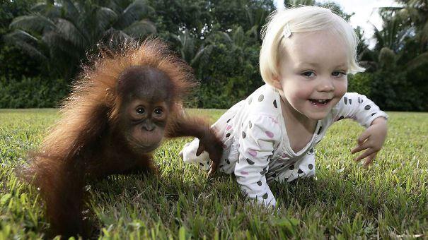 ребенок и орангутанг