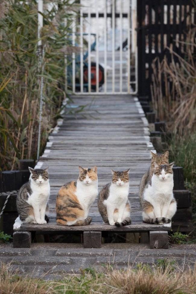 кот и весна