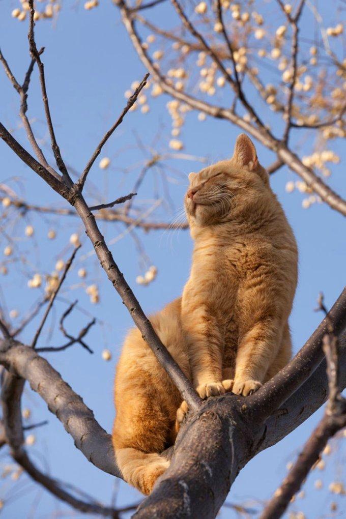 кот весной на дереве