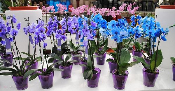 рассадка орхидей