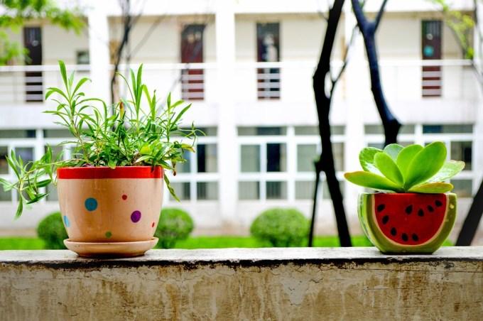 топ 5 растений-очистелей