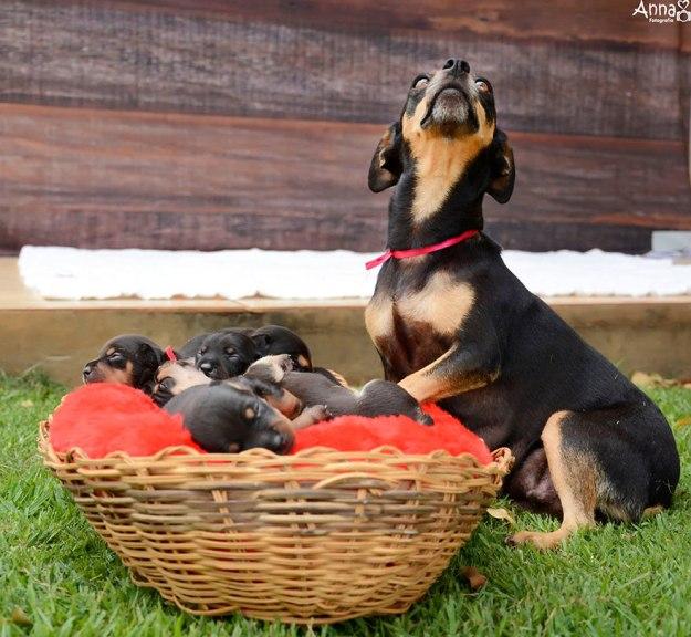 мама и щенята