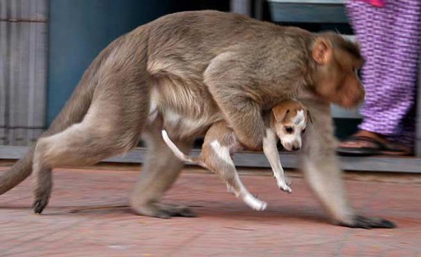 щенок и обезьяна