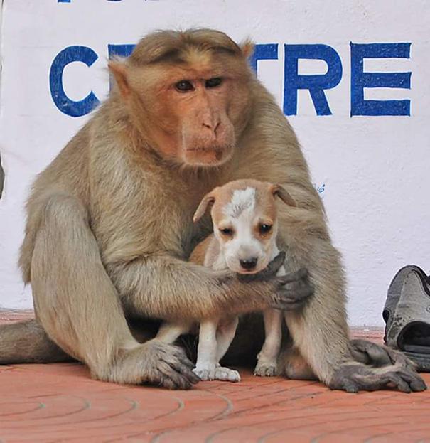 щенок с обезьяной
