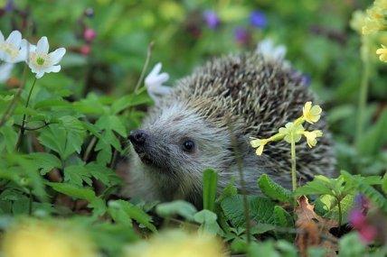 Что делают животные весной? Видео для деток