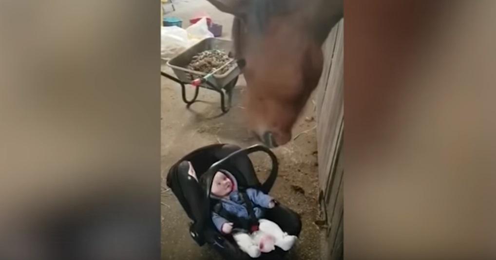 Лошадь помогла успокоить хнычущего малыша, который лежал в переносном кресле