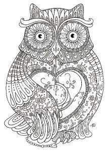 Раскраска для взрослых сова картинка