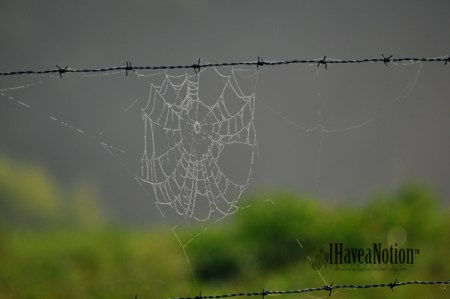spiders web on a barbwire fence