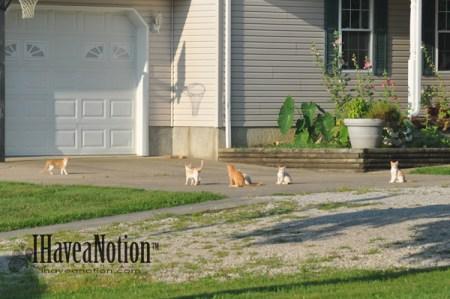 the wild kittens